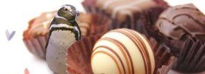 等身大リアルペンギンチョコレートが当たる!(京都水族館・すみだ水族館Facebookキャンペーン)