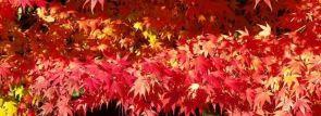 関東紅葉・穴場・ライトアップ【東京・神奈川・埼玉・千葉・栃木・茨城・群馬】