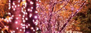 """目黒川沿いの桜並木に""""冬の桜""""を演出「目黒川みんなのイルミネーション2014」開催"""
