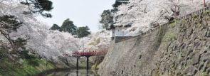 弘前さくらまつりで2,600本以上の桜が咲き誇る