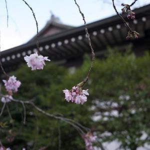 関東お花見2017~桜の名所・見ごろ・穴場・ライトアップ情報~