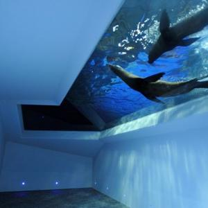 スカイツリーの水族館「すみだ水族館」徹底ガイド。ペンギンプールが国内最大級!