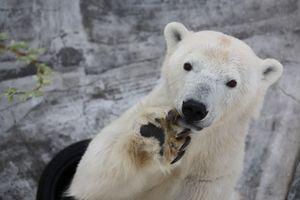 北海道・東北の動物園