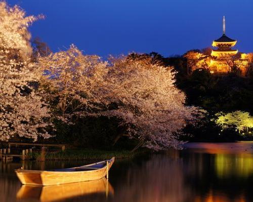 横浜・三渓園で桜ライトアップ「観桜の夕べ」3/25から