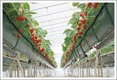飯森苺農園