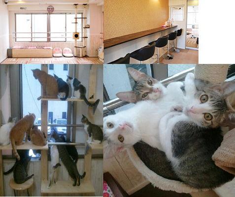 猫カフェ にゃんくる