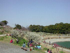 佐布里 緑と花のふれあい公園