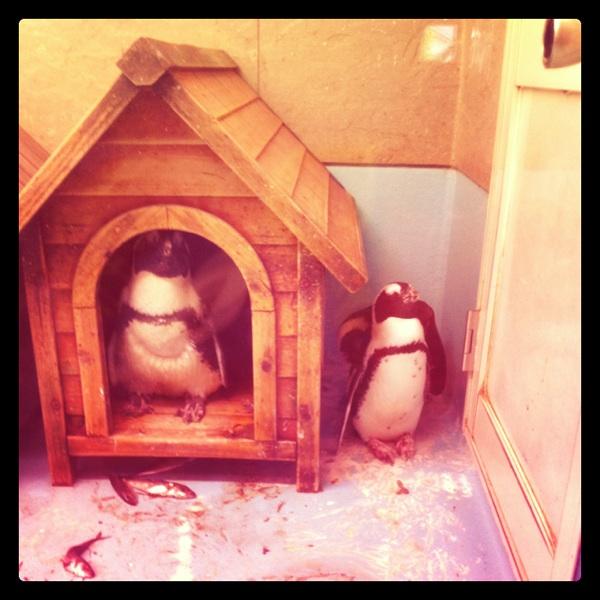 ペンギンカフェ