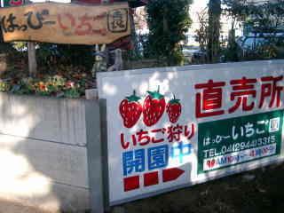 新井ファーム はっぴーいちご園