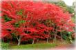 滋賀 大池寺の紅葉2016