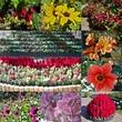 ケイトウにネコノヒゲ(=^・ω・^=)色とりどりの花々