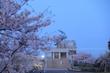 桜咲く平塚のてっぺんへ