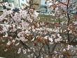 小樽に行って来ました、その2『小樽芸術村』『若鶏時代なると』へ。