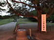 四季の森公園のホタル鑑賞で利用できるオススメの無料駐車場とは?渋滞を確実に回避し混雑回避するとっておきのマル秘情報