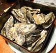 かき小屋 豊丸水産 広島本通り店 予算3000円!リーズナブルに牡蠣や穴子を楽しめます!(広島市中区本通・紙屋町)