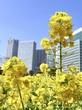 菜の花畑と梅の花♡浜離宮恩賜庭園