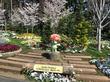 横浜市長も来場!入園無料のお花畑「里山ガーデン」のおすすめ駐車場やお得情報・開催イベントなど(まとめ)