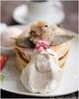 春のパンケーキがスタート!cherry blossom pancake@ウズナオムオム