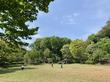 [神奈川・横浜] 子供でも簡単に捕獲できるカブトムシ採取場所まとめ!駅徒歩10分で10匹以上捕まえれたおすすめスポットとは