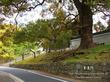 青蓮院の桜 9
