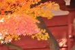 近場で紅葉狩り☆本土寺(松戸市)