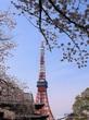 桜2018♡増上寺から東京タワービュー