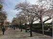 4月9日(土)お花見日和に恵まれた週末の隅田公園