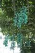 ヒスイカズラと不思議な植物群|神代植物公園