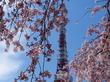 ☆東京タワーとしだれ桜のコラボレーションが美しい~!!最高のお花見スポット☆