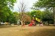 京王線で遊具のある公園探し♪府中の森公園(東府中)で遊んできた