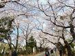 谷中の桜を見た後は・・・。