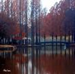 埼玉の美しい公園