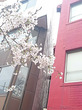 東京大学大学院理学系研究科附属植物園