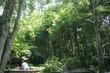 竹林cafe