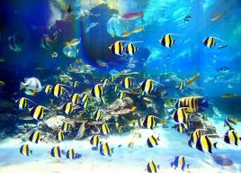 九州・沖縄の水族館