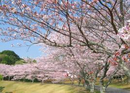 東海・中部お花見2017~桜の名所~