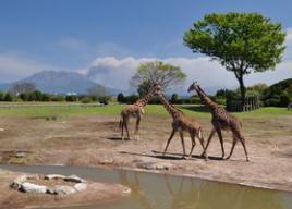 九州・沖縄の動物園