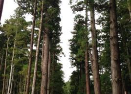 北海道・東北初詣2018【北海道・青森・秋田・山形・岩手・宮城・福島】