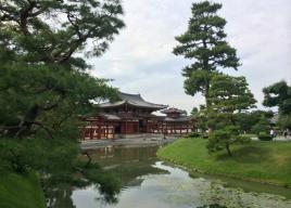 関西 藤(フジ)の名所・見頃2018~京都・大阪・兵庫・滋賀・奈良・和歌山~