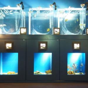 夜の水族館探検ツアーも開催!京都水族館で涼を感じよう