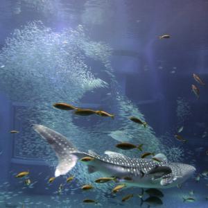 関西の水族館