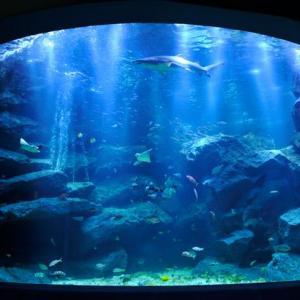 関東の水族館