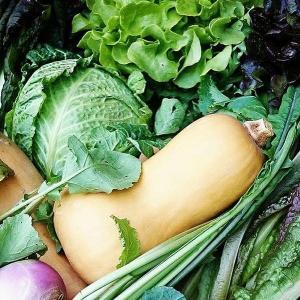 体に優しいオーガニック健康野菜