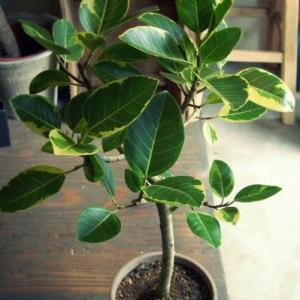Plant_観葉植物