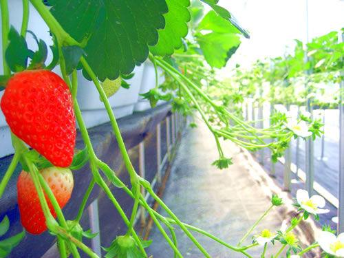 Grand Berry(グランドベリー)