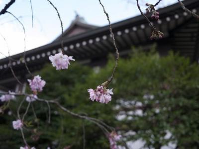 靖国神社(靖國神社)