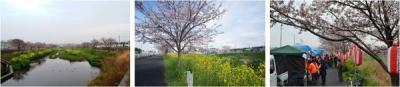 国分川桜まつり