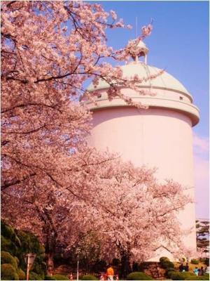 栗山浄水場/栗山桜まつり