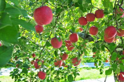 フルーツパーク 黒内果樹園