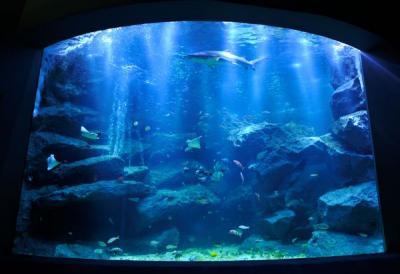 すみだ水族館(SUMIDA AQUARIUM)